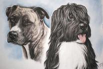 Amstaff, Terrier, Hütehund, Pastellmalerei