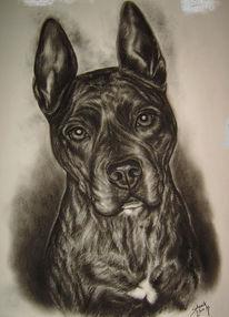 Staffordshire, Tierzeichnung, Zeichnung, Amstaff