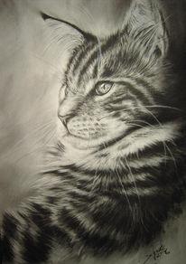 Kohlezeichnung, Zeichnen, Rassekatze, Katze