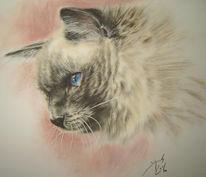 Katze, Katzenzeichnung, Pastellmalerei, Birma