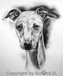 Kohlezeichnung, Whippetzeichnung, Windhund, Hundezeichnung