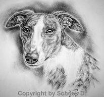 Galgo, Windhund, Kohlezeichnung, Zeichnungen