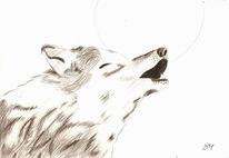 Heulen, Mond, Wolf, Tiere