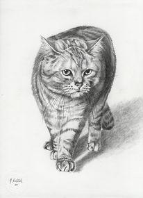 Katze, Kater, Tierportrait, Handzeichnung
