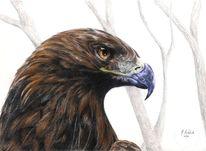 Handzeichnung, Zeichnung, Raubvogel, Adler