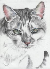 Kohlezeichnung, Tierportrait, Katze, Handzeichnung