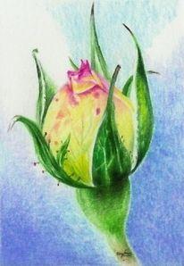 Handzeichnung, Zeichnung, Rose, Buntstiftzeichnung