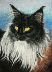 Katze, Portrait, Zeichnung, Pastellmalerei