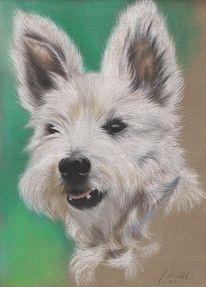 Hund, Zeichnungen, Tiere, Terrier