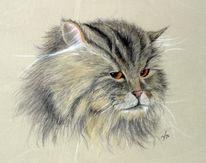 Pastellmalerei, Katze, Tiere, Zeichnungen