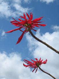 Blumen, Himmel, Pflanzen, Fotografie