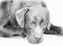 Portrait, Tiere, Hund, Bleistiftzeichnung