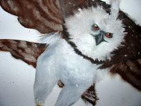 Weiß, Adler, Schnabel, Ölmalerei