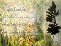 Tau, Frische, Zufriedenheit, Gras