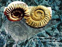 Worte, Erinnerung, Ammonit, Ewigkeit