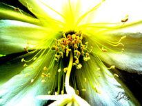 Blüte, Kaktus, Makro, Fotografie