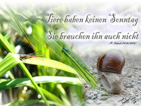 Schnecke, Libelle, Tiere, Ruhe