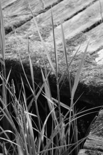 Seeufer, Natur, Fotografie, Reiseimpressionen