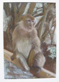 Zeichnungen, Affe