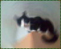 Tiere, Katze, Schrank, Fotografie