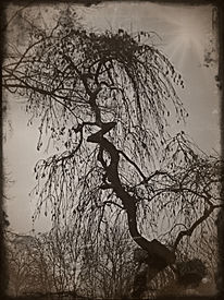 Geschichte, Zeit, Natur, Fotografie