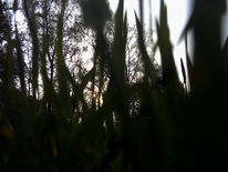 Insekten, Natur, Fotografie