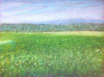 Wiese, Grün, Gras, Landschaft