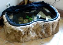Fische, Teich, Wasser, Wohnung