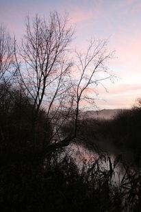 Wasser, Nebel, Sonnenaufgang, Strauch