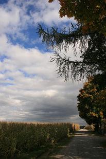 Maisfelder, Wolken, Weg, Baum