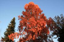 Baum, Himmel, Licht, Fotografie
