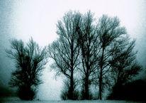 Kalt, Früh, Zweig, Winter
