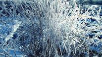 Waldboden, Pflanzen, Eis, Halm