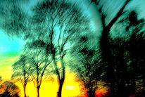 Äste, Sonne, Horizont, Schnell