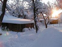 Licht, Schnee, Baum, Holz