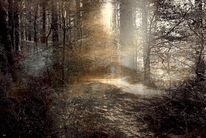 Schatten, Wald, Wurzel, Märchenhaft
