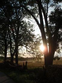 Sonne, Weg, Baum, Feld