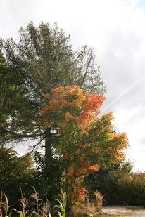 Baum, Licht, Himmel, Fotografie