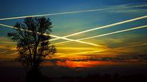 Zweig, Wolken, Chemtrails, Sonnenuntergang