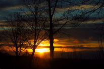 Sonnenaufgang, Himmel, Zweig, Früh