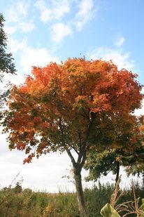 Baum, Feld, Himmel, Fotografie