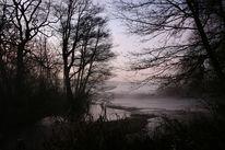 Sonnenaufgang, Baum, Leben, Wasser