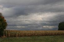 Himmel, Wiese, Mais, Fotografie