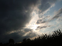 Licht, Baum, Mais, Wolken