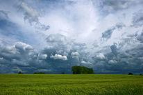 Wind, Getreide, Baum, Wolken