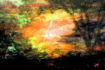 Wind, Zweig, Licht, Baum