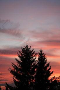 Himmel, Baum, Wolken, Fotografie