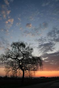 Himmel, Birken, Licht, Wolken