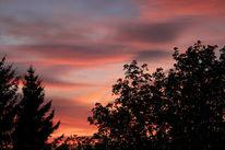 Himmel, Baum, Garten, Fotografie
