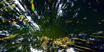 Baum, Spiegel, Pflanzen, Nass
